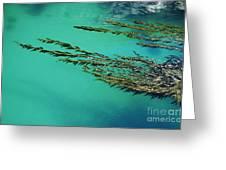 Seaweed Patterns Greeting Card