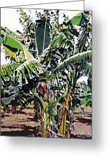 Second Bananas Greeting Card