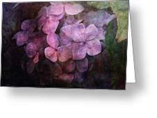 Secret Hydrangea 1538 Idp_2 Greeting Card