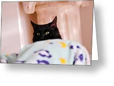 Secret Mission For Catnip Greeting Card