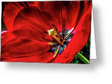 Secret Of The Red Tulip Greeting Card