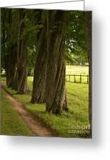 Secret Path Greeting Card