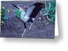 Secretary Bird Running Greeting Card