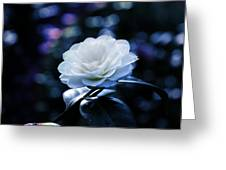 Secrets Of Nature Greeting Card
