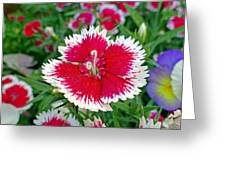 Sedona Dianthus Greeting Card