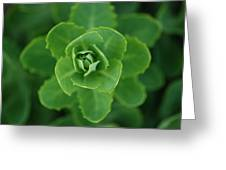 Sedum Greeting Card