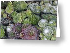 Sedum Plants Used As Green Roof Greeting Card