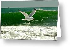 See Gull Greeting Card