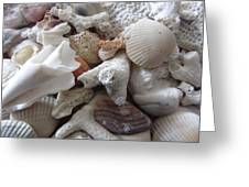See Sea Shells Fom The Sea Greeting Card