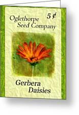Seed Packet -- Gerbera Daisies Greeting Card