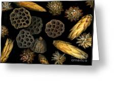 Seeds And Pods Greeting Card