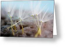 Dandelion Seeds Greeting Card