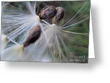 Seeds Ready For Take Off Greeting Card