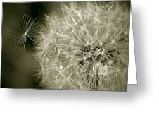 Seedy Dandelion Greeting Card
