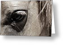 Stillness In The Eye Of A Horse Greeting Card