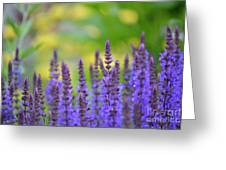 Seeing Purple Greeting Card