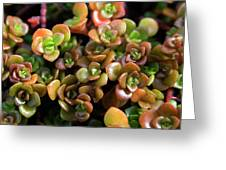 Seeing Succulents Greeting Card