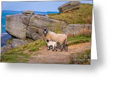 Seep And Lamb Greeting Card