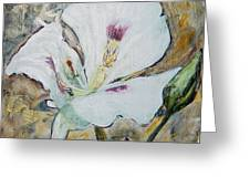 Sego Lily Greeting Card