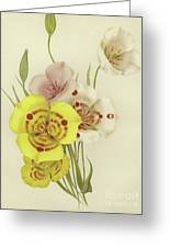 Sego Lily   Calochortus Greeting Card