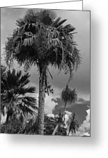 Selby Garden Palms Greeting Card