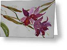 Selby Orchids Greeting Card