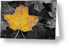 Selective Color Leaf Greeting Card