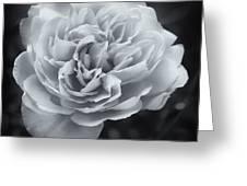 Selenium White Rose Greeting Card