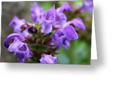 Selfheal Up Close Greeting Card