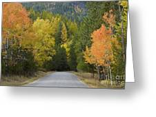 Selkirk Color Greeting Card