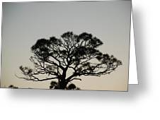 Senset Trees Greeting Card