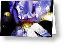 Sensual Iris Greeting Card