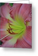 Sensual Pink Lilly Greeting Card