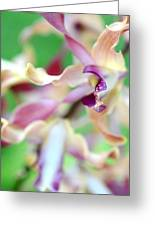 Sensual Touch Of Exotic II. Orchid II Greeting Card
