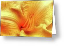 Sensuous Lily Greeting Card