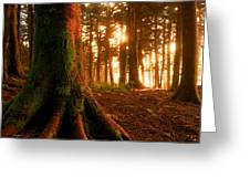 Sentiel Of The Forest Greeting Card