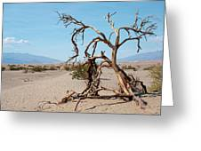 Sentinel Of The Dunes Greeting Card