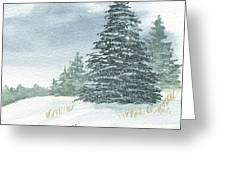 Sentinel Spruce Greeting Card