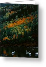 Sentinels Of September Serenity Greeting Card