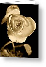 Sepia Antique Rose Greeting Card by M K  Miller
