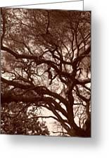 Sepia Branch Burst Greeting Card
