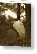 Sepia Egret  Greeting Card