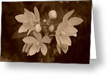 Sepia Flower Greeting Card
