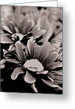 Sepia Flowers Greeting Card