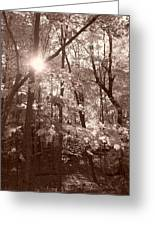 Sepia Forest Greeting Card