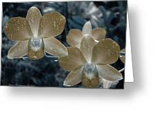 Sepia Orchid Greeting Card