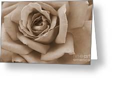 Sepia Rose Abstract Greeting Card