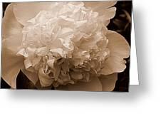Sepia Series - Peony Greeting Card
