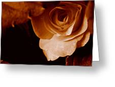 Sepia Series - Rose Petals Greeting Card