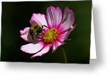 September Bee On Cosmos Greeting Card